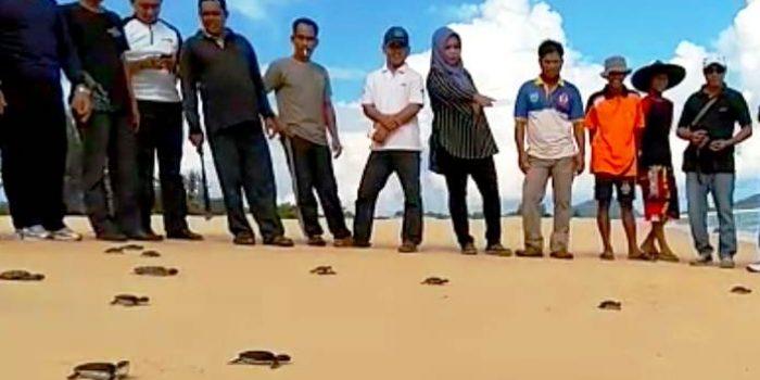 Pelepasan Anak Penyu di Pantai
