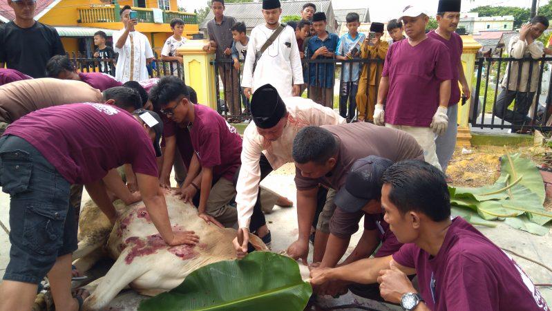 Walikota Tanjungpinang, H Syahrul S.Pd saat menyembelih satu ekor Sapi di Mesjid As-Sakinah Perum Taman Harapan Indah