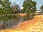 Hutan Mangrove (Bakau) yang diduga ditimbun dan dirusak oleh Along yang diakui miliknya
