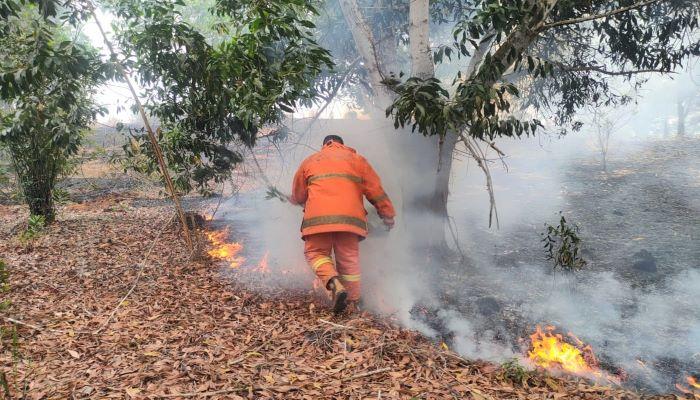Petugas Damkar Tanjungpinang Saat Memadamkan Api