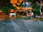 Dua Hewan Kurban Yang Diserahkan IPK Bintan